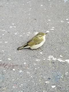 幸せを呼ぶ渡り鳥